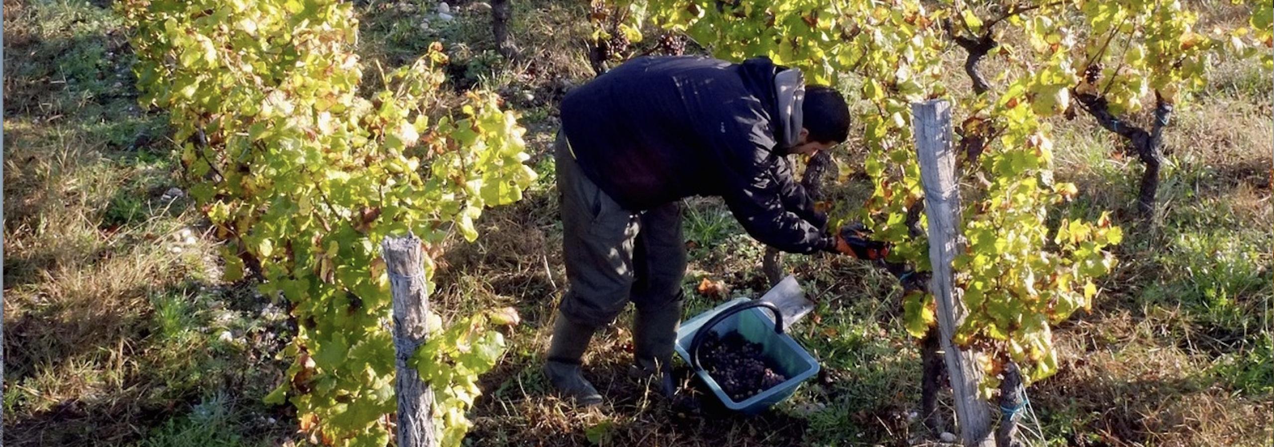 amos74 agence intérim travailleurs agricoles polonais et slovaques